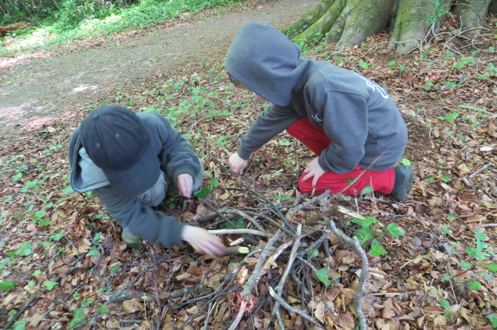 Animal den building