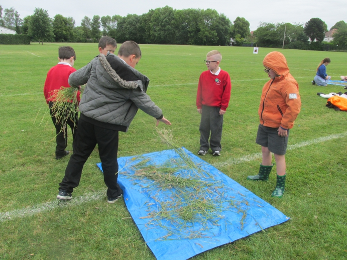 Gathering materials to make a sensory path